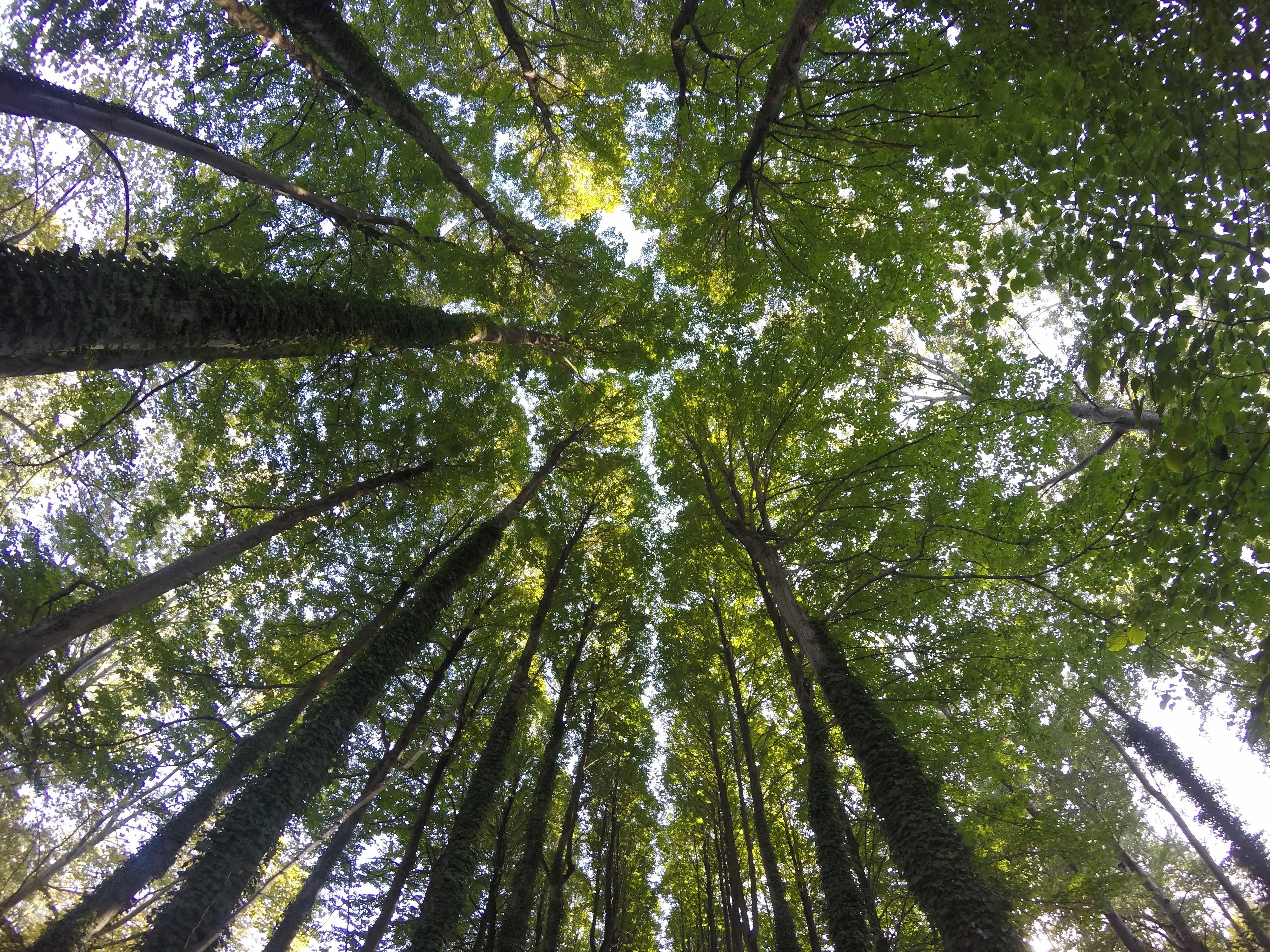 trees-2923387